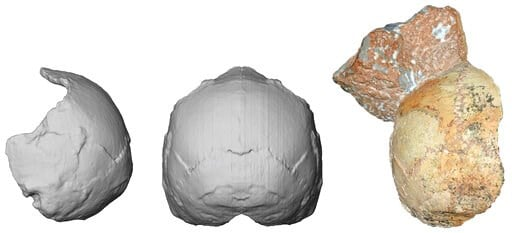 (Katerina Harvati/University of Tuebingen via AP). This image provided by the University of Tuebingen in Germany shows the Apidima 1 partial cranium fossil, right, with a piece of rock still attached, and its digital reconstruction from a posterior vie...