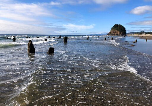"""(AP Photo/Andrew Selsky). In this Thursday, Aug. 1, 2019, photo, evidence of a Cascadia earthquake's awesome destructive power is visible at the beach in Neskowin, Ore. A """"ghost forest"""" of Sitka spruces juts up from the beach in the tiny town. The tree..."""