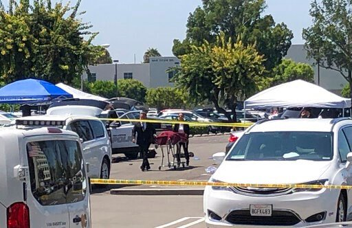 (AP Photo/Amy Taxin). Orange County coroners remove a body of a stabbing victim from a parking lot from a parking lot at California State University, Fullerton on Monday, Aug. 19, 2019. An employee of the university was killed in a stabbing in a campus...
