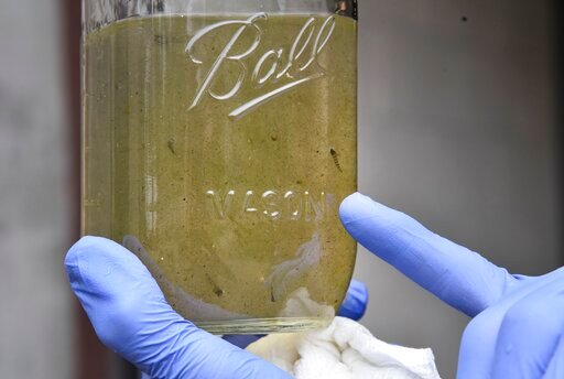 (Bailey Wright/Record-Journal via AP). FILE - In this May 23 2019 file photo, Southern Connecticut State University professor Vincent Breslin holds a sample of water that contains possible microplastics at the North Haven Water Treatment Plant on Unive...