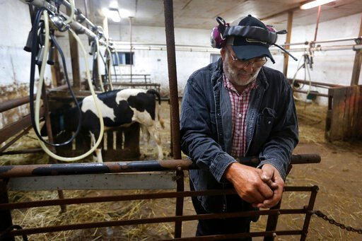 (AP Photo/Robert F. Bukaty). In this Thursday Aug. 15, 2019 photo, dairy farmer Fred Stone pauses while working in the milking room at his farm in Arundel, Maine. Fred Stone and his wife Laura, whose dairy farm is contaminated by toxic chemicals known ...
