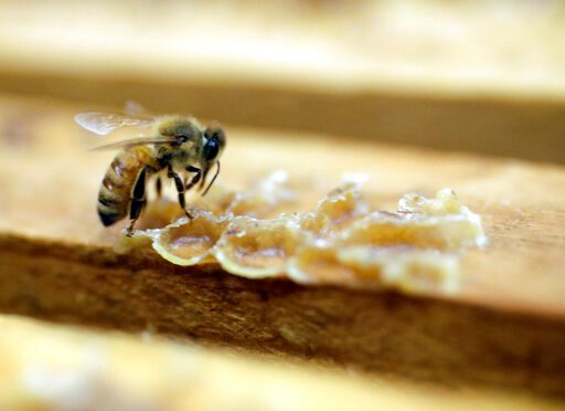 (AP Photo/Marcio Jose Sanchez, File). FILE - In this July 16, 2014, file photo, a bee works on a honeycomb the Gene Brandi Apiary in Los Banos, Calif. A widely used agricultural pesticide that California environmental officials have said has been linke...