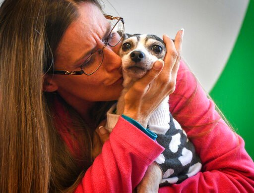 """(Steve Mellon/Pittsburgh Post-Gazette via AP). Katheryn Strang is reunited with her toy fox terrier """"Dutchess"""" at Humane Animal Rescue on Friday, Oct. 11, 2019 in Pittsburgh.  Humane Animal Rescue says the 14-year-old named Dutchess was found hungry, s..."""