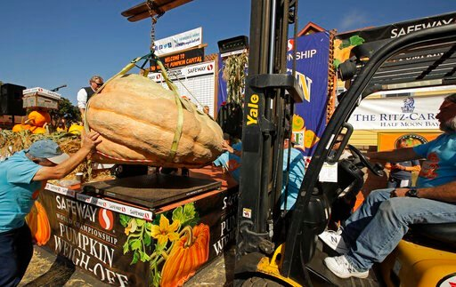 (AP Photo/Ben Margot). A massive pumpkin grin by Leonardo Urena of Napa, Calif., is lowered on a scale with a forklift on Monday, Oct. 14, 2019, in Half Moon Bay, Calif. The pumpkin weighed in at 2,175 lbs., a new California weight record.