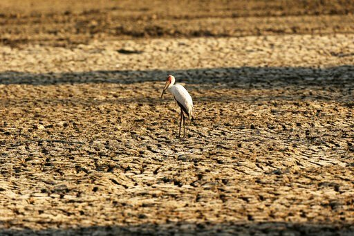 (AP Photo/Tsvangirayi Mukwazhi). In this Oct, 27, 2019, photo, a bird stands on a sun-baked pool that used to be a perennial water supply in Mana Pools National Park, Zimbabwe. Elephants, zebras, hippos, impalas, buffaloes and many other wildlife are s...