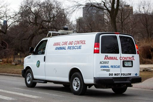 (Ashlee Rezin Garcia/Chicago Sun-Times via AP). A Chicago Animal Care and Control vehicle drives along the 2400 block of North Cannon Drive  in Chicago, Thursday morning, Jan. 9, 2020, after 5-year-old boy and a man were bitten in separate attacks this...