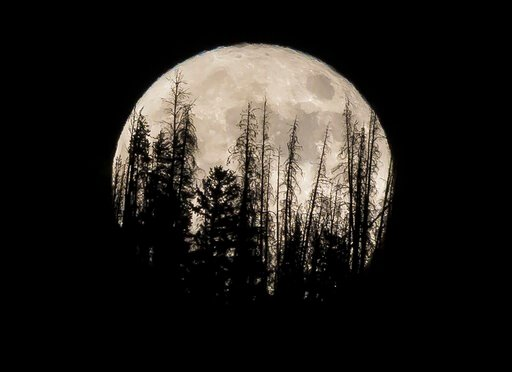 (AP Photo/Jack Dempsey, File). FILE - In this Nov. 14, 2016 file photo, evergreen trees are silhouetted on the mountain top as a supermoon rises over over the Dark Sky Community of Summit Sky Ranch in Silverthorne, Colo., Monday, Nov. 14, 2016. A super...